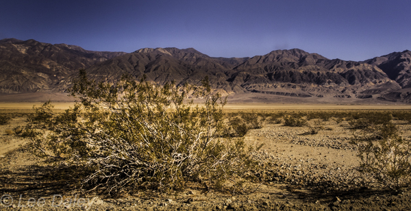 Death Valley National Park, CA. desert shrub behind Panamint Mountain Range.