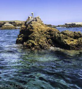 Islas Marietas volcanic islands pelican
