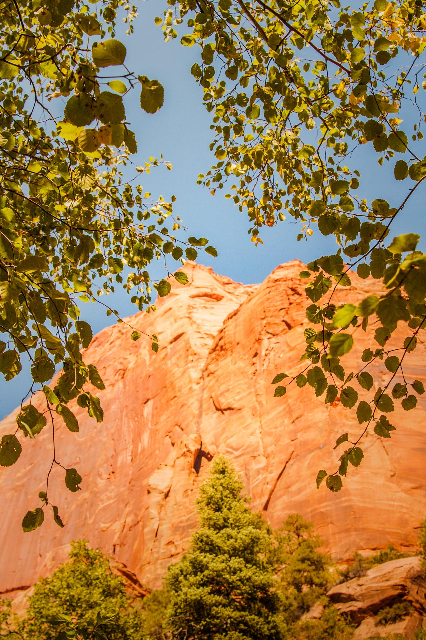 Canyons-Bryce-Utah