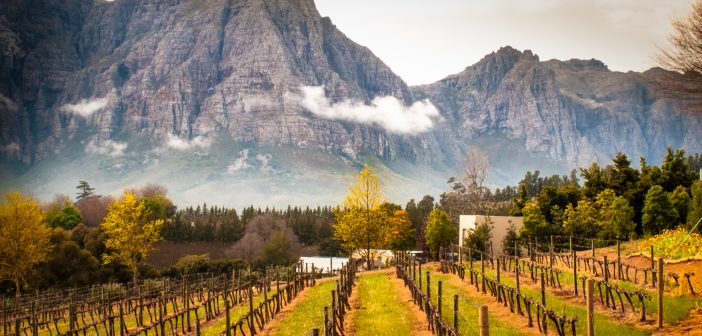 Exploring South Africa's Cape Winelands