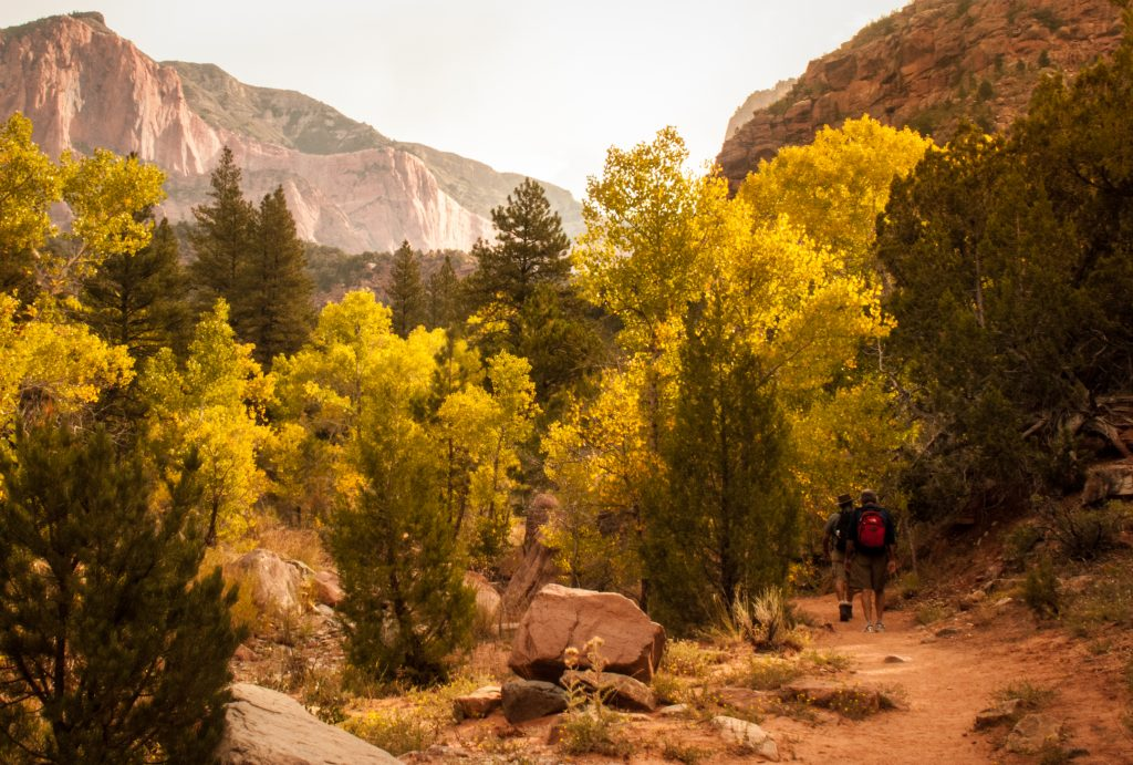 Hiking toward red rock cliffs, Finding Fall Color Gold in Zion National Park