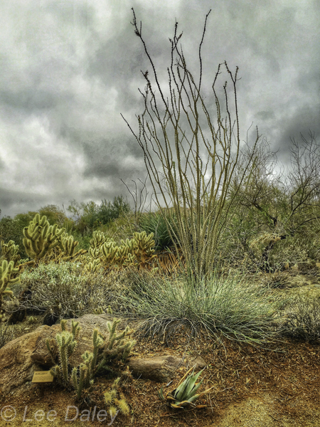 Palm Springs, The Living Desert, Palm Desert, CA. 1,200 acres of undisturbed Sonoran Desert with natural plants from around the world.