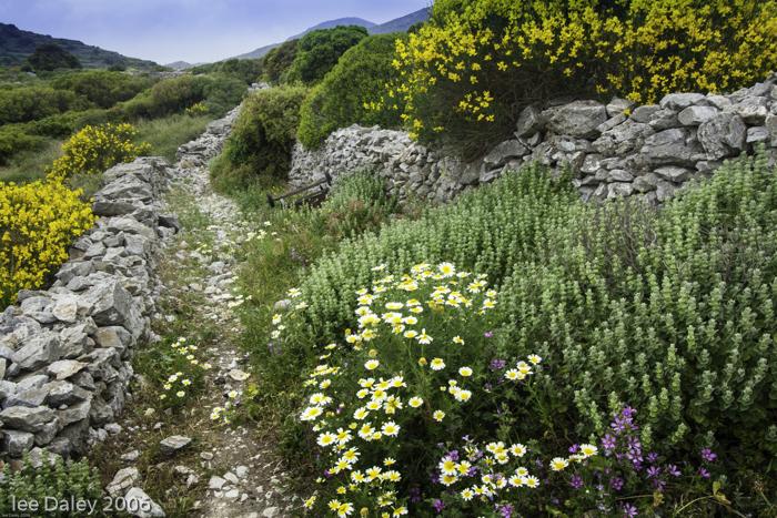 Georgós Nu Wines, Spring wildflowers bloom on the hillsides of Greek islands alongside Greek wines.