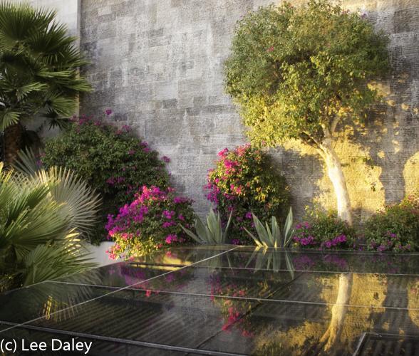 San Miguel de Allende at Hotel Matilda, reflections of beauty, Hotel Matilda, San Miguel, Mexico, bougainvillea reflections