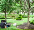 Romantic couple, Topiary Park, a park that is a painting, Topiary Park in Downtown Columbus