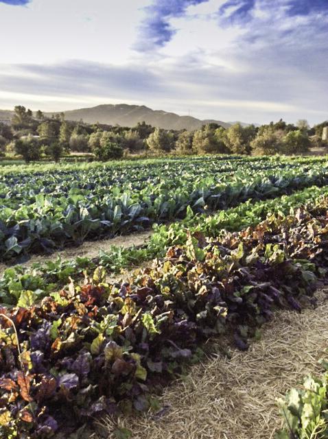 La Cocina Que Canta,field of greens