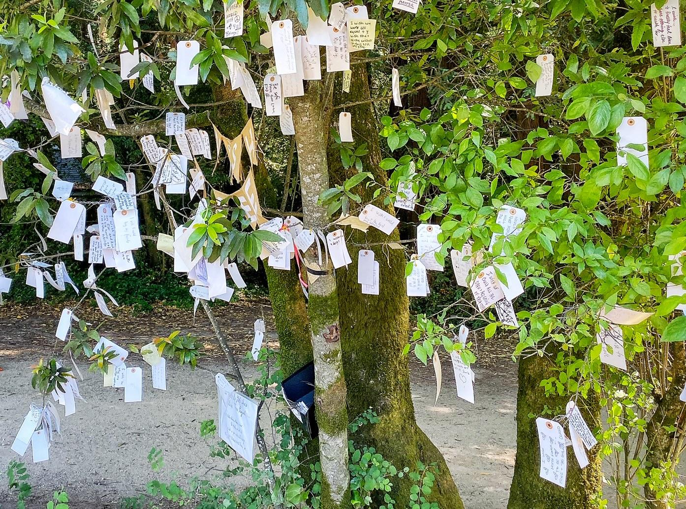 wish-tree-millvalley-CA